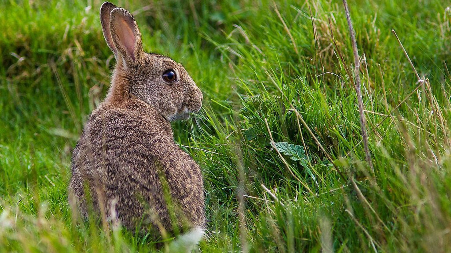 Maybe the country should start eating wild rabbits?. Picture: Natural England/Allan Drewitt - Credit: Natural England/Allan Drewitt