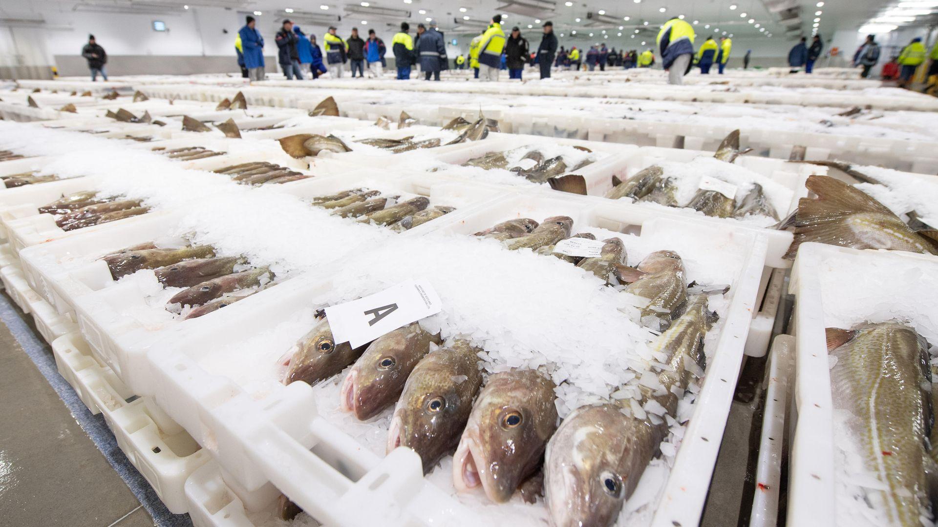 Fish merchants view trays of fish at Peterhead Fish Market in Aberdeenshire - Credit: PA