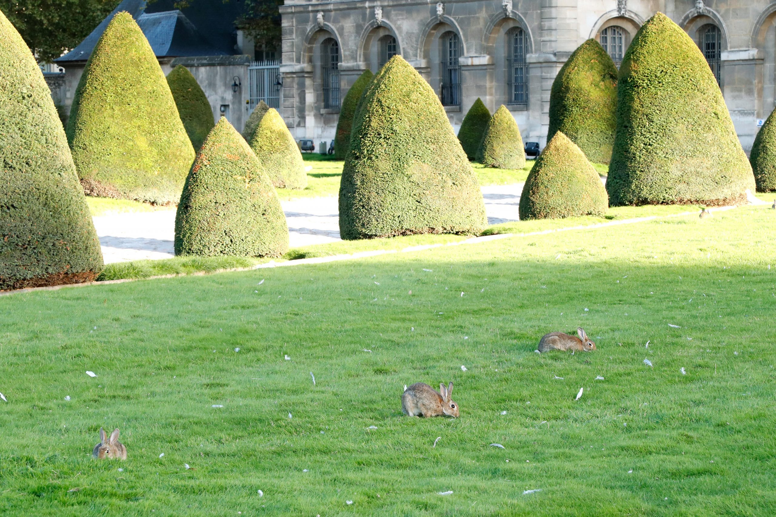 Rabbits at Les Invalides. The colony there is Paris' second-biggest, after the one at the bois de Boulogne.