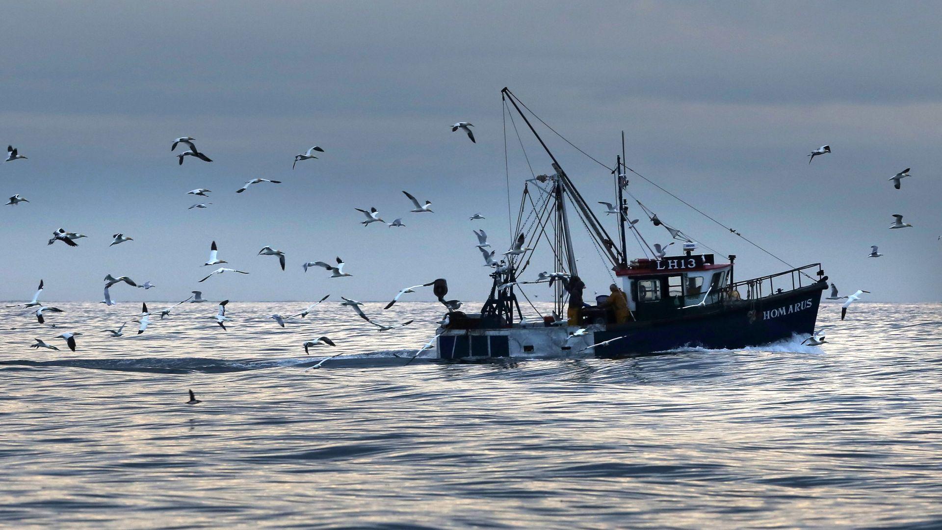 Scottish inshore fishermen at work off the east coast of Scotland, near Bass rock. - Credit: PA