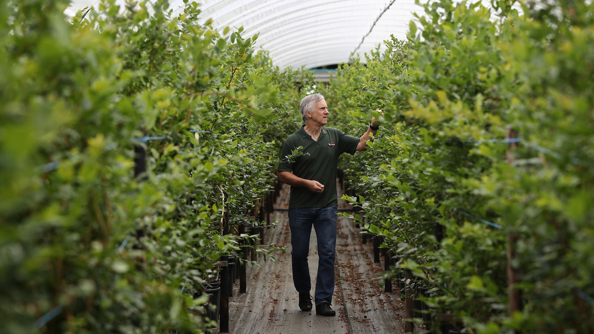 Stephen Taylor, Managing Director of Winterwood Farms fruit farm in Maidstone, Kent, says he is struggling to fill positions for fruit pickers in the summer months with the number of seasonal workers applying down 90% - Credit: PA Wire/PA Images