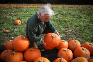 Wiltshire pumpkin farmer Mick Smales inspects his crop. Photo by Matt Cardy/Getty Images